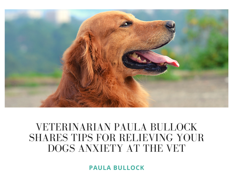 Veterinarian Paula Bullock Shares Tips for Relieving Your Dogs Anxiety at the Vet