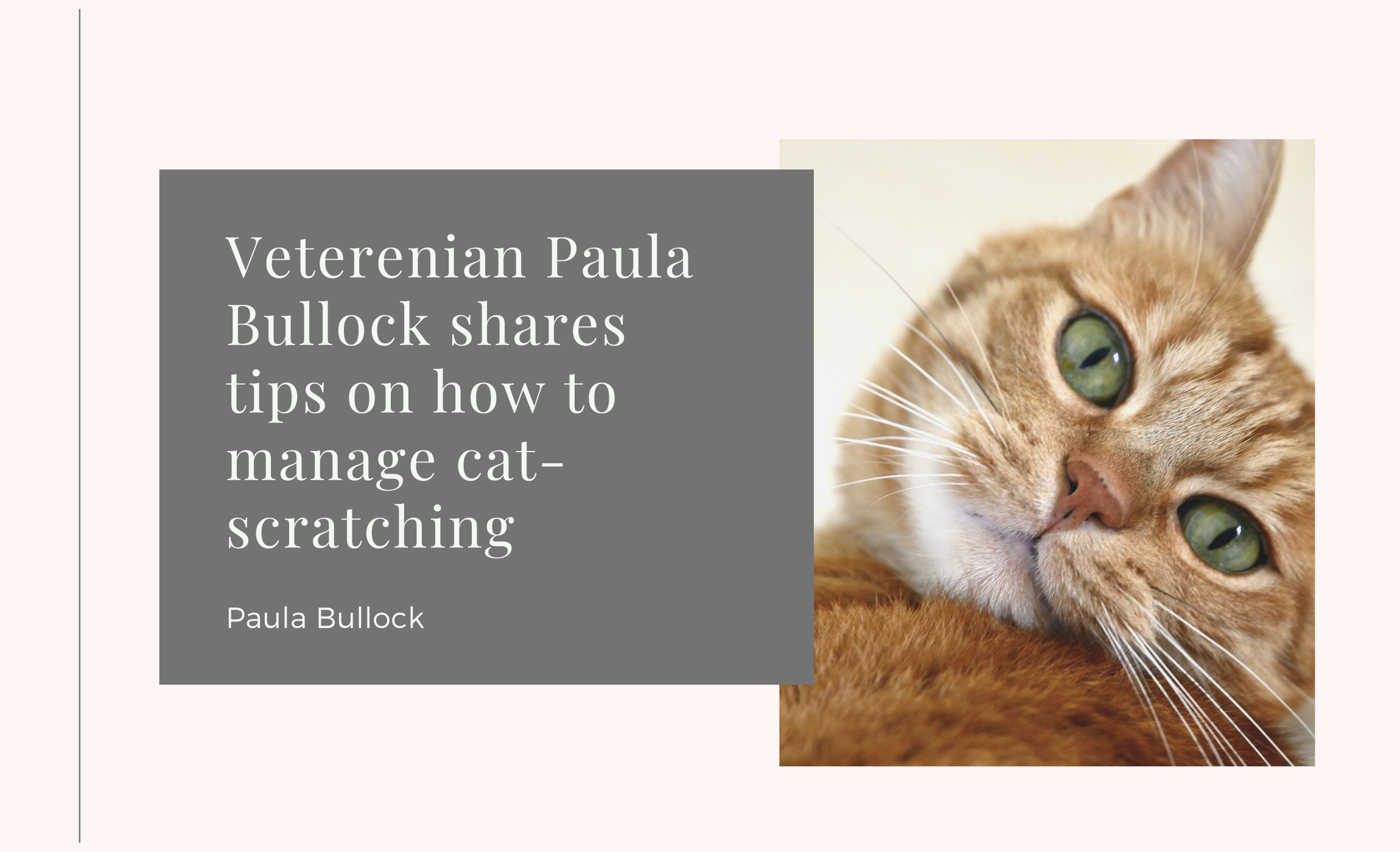 Veterenian Paula Bullock Shares Tips on How to Manage Cat-Scratching