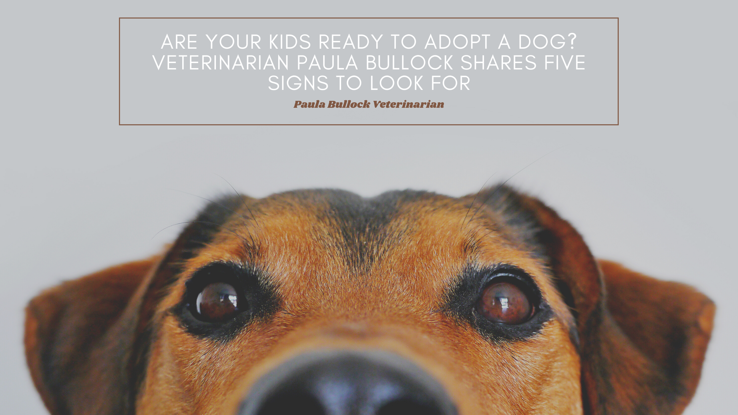 Are Your Kids Ready To Adopt A Dog? Veterinarian Paula Bullock Shares Five Signs To Look For
