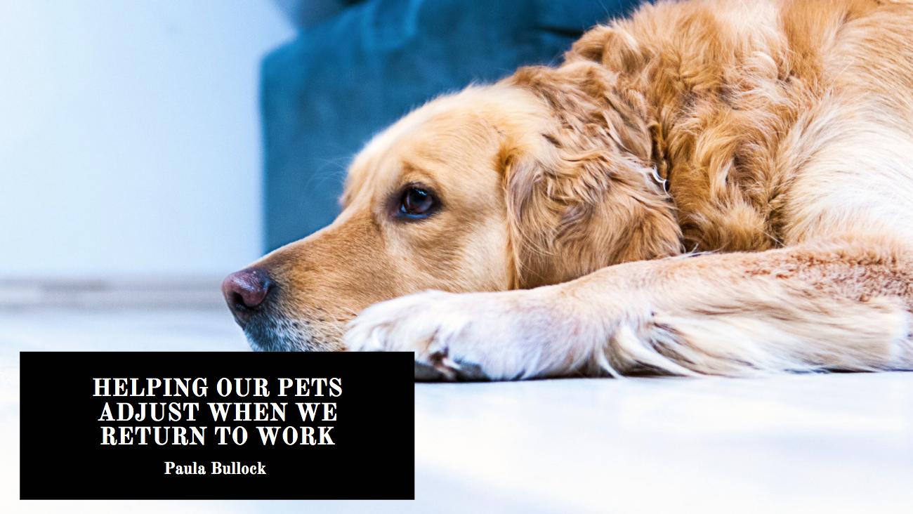 Paula Bullock On Helping Our Pets Adjust When We Return to Work